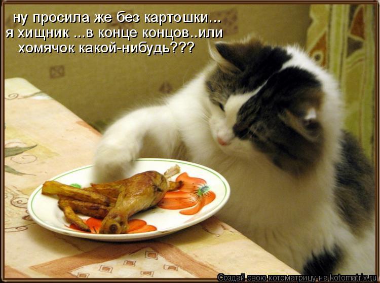 Котоматрица: ну просила же без картошки... я хищник ...в конце концов..или хомячок какой-нибудь???