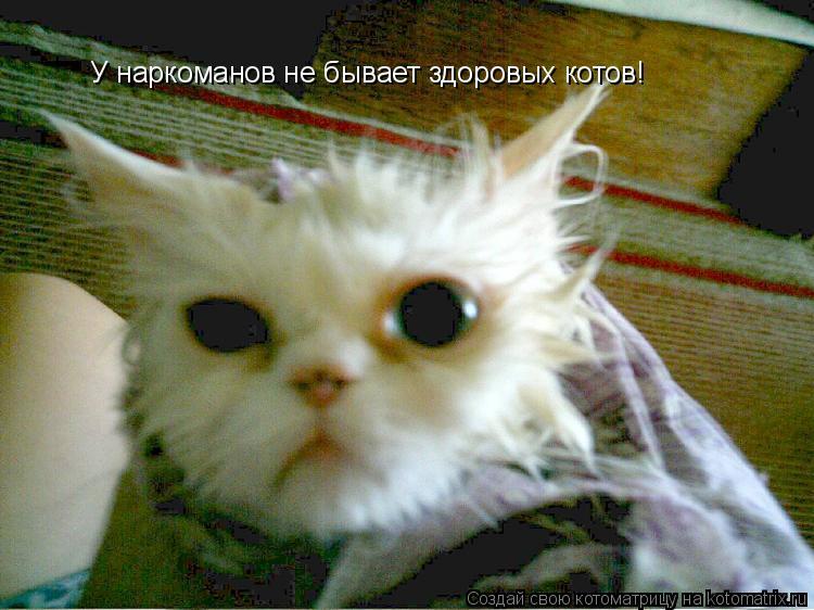 Котоматрица: У наркоманов не бывает здоровых котов!