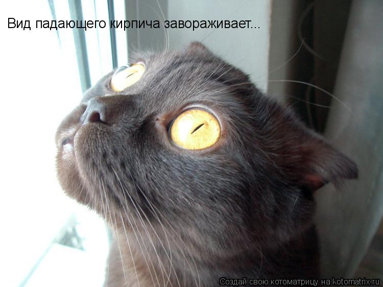 24 раз. коты +и кошки приколы. коты фото приколы. в цитатник. новые.
