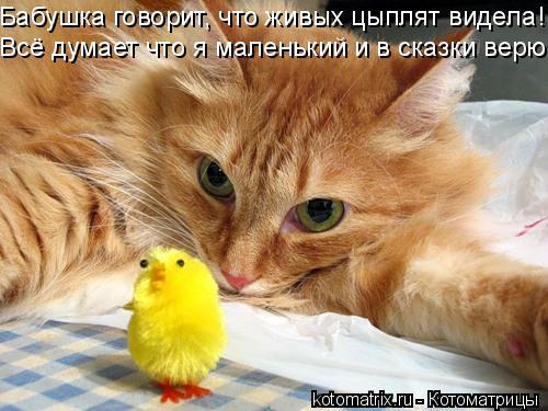 Котоматрица: Бабушка говорит, что живых цыплят видела! Всё думает что я маленький и в сказки верю.