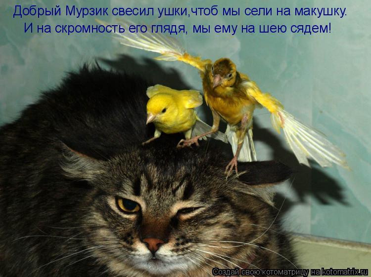 Котоматрица: Добрый Мурзик свесил ушки,чтоб мы сели на макушку. И на скромность его глядя, мы ему на шею сядем!