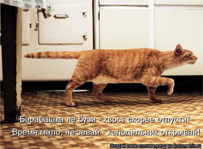 Котоматрица: Барабашка не бузи - хвост скорее отпусти! Время мало, не зевай - холодильник открывай!