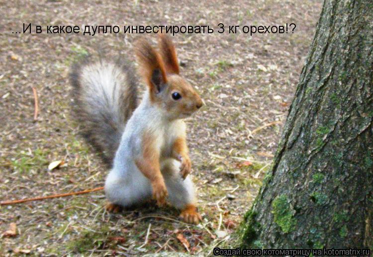 Котоматрица: ...И в какое дупло инвестировать 3 кг орехов!?