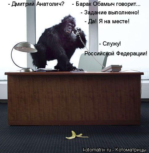 Котоматрица: - Задание выполнено! - Да! Я на месте! - Служу! Российской Федерации! - Дмитрий Анатолич?     - Барак Обамыч говорит...