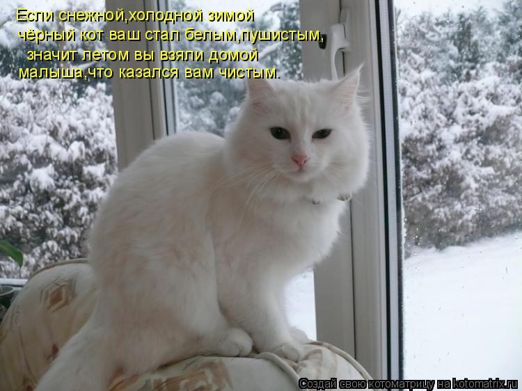 Котоматрица: Если снежной,холодной зимой  чёрный кот ваш стал белым,пушистым, значит летом вы взяли домой малыша,что казался вам чистым.
