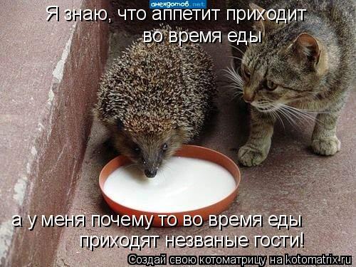 Котоматрица: Я знаю, что аппетит приходит  во время еды а у меня почему то во время еды приходят незваные гости!