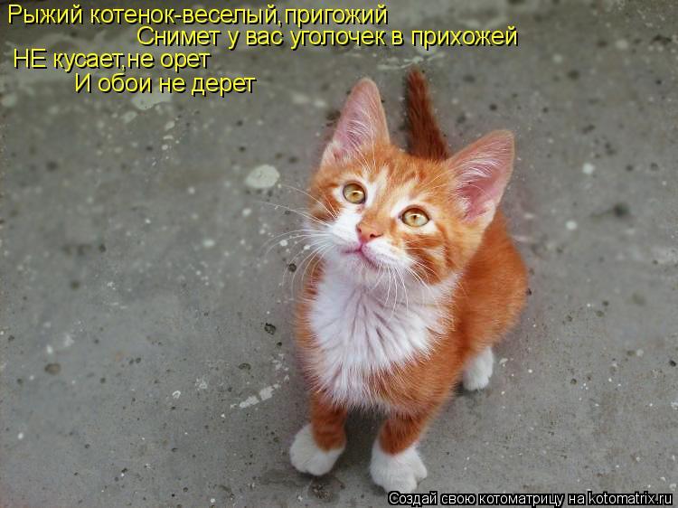 Котоматрица: Рыжий котенок-веселый,пригожий Снимет у вас уголочек в прихожей НЕ кусает,не орет И обои не дерет