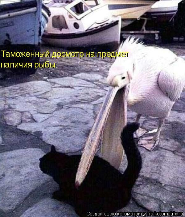 Котоматрица: Таможенный досмотр на предмет наличия рыбы.