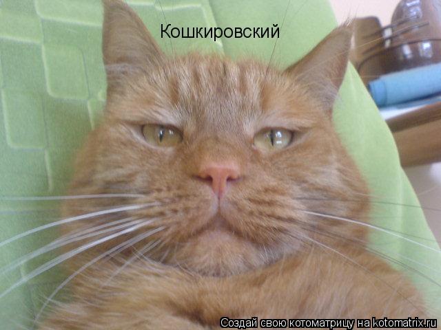 Котоматрица: Кошкировский