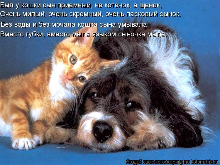 Котоматрица: Был у кошки сын приемный, не котёнок, а щенок,  Очень милый, очень скромный, очень ласковый сынок. Без воды и без мочала кошка сына умывала Вме