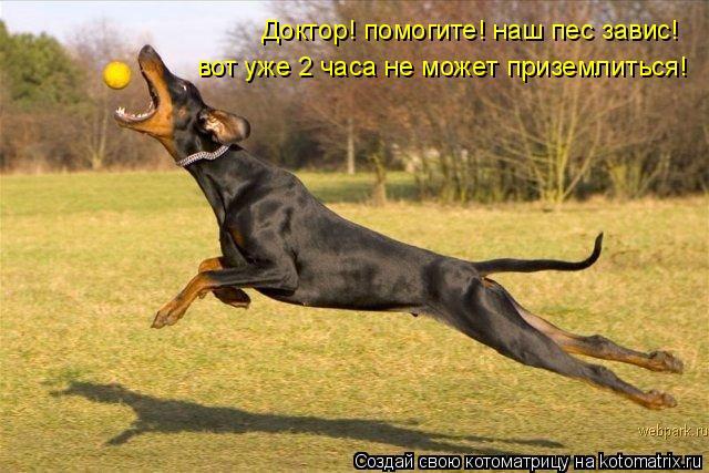 Котоматрица: Доктор! помогите! наш пес завис!  вот уже 2 часа не может приземлиться!