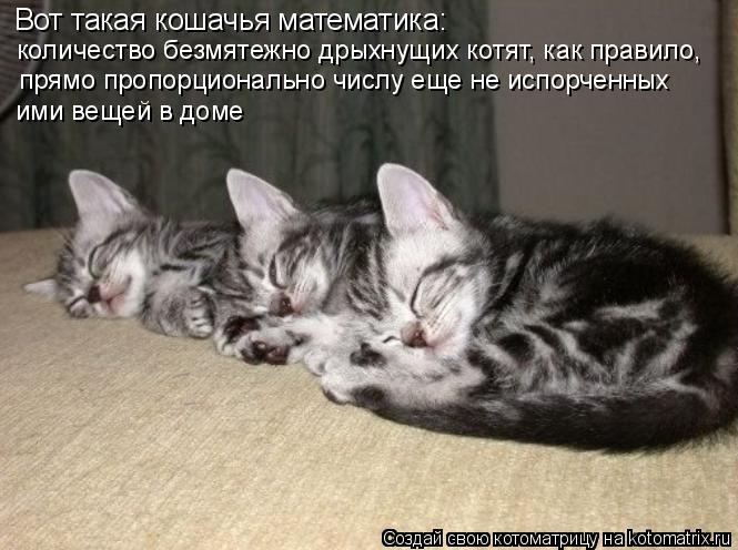 Котоматрица: Вот такая кошачья математика:  количество безмятежно дрыхнущих котят, как правило, прямо пропорционально числу еще не испорченных ими веще
