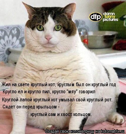 """Котоматрица: Жил на свете круглый кот, круглым был он круглый год Кругло ел и кругло пил, кругло """"мяу"""" говорил Круглой лапой круглый кот умывал свой кругл"""