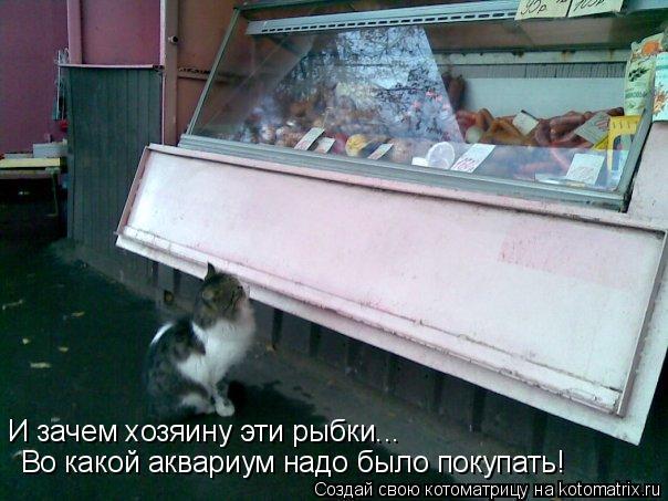 Котоматрица: И зачем хозяину эти рыбки... Во какой аквариум надо было покупать!