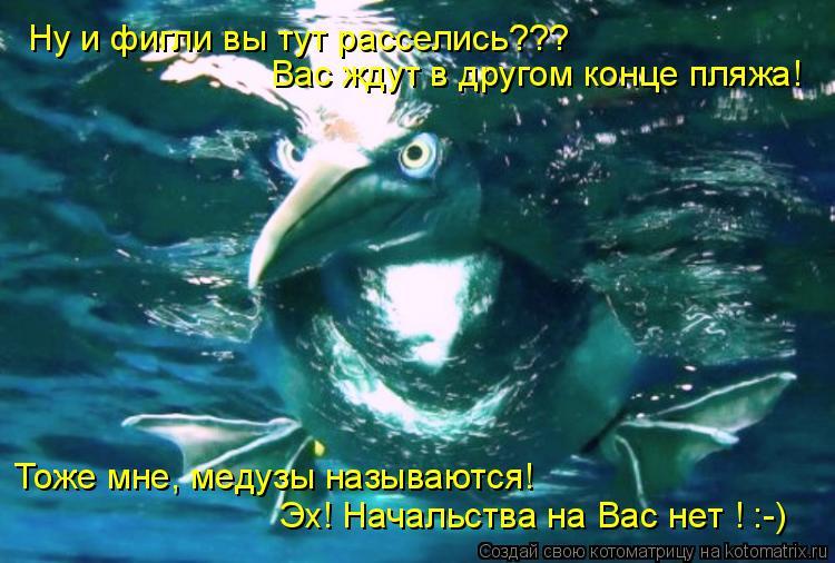 Котоматрица: Ну и фигли вы тут расселись??? Эх! Начальства на Вас нет ! :-) Вас ждут в другом конце пляжа! Тоже мне, медузы называются!