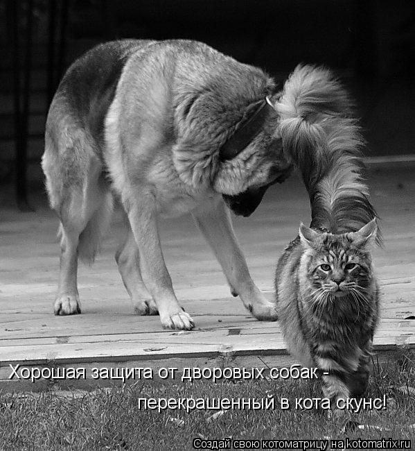 Котоматрица: Хорошая защита от дворовых собак - перекрашенный в кота скунс!