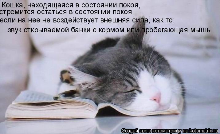 Котоматрица: Кошка, находящаяся в состоянии покоя, стремится остаться в состоянии покоя, если на нее не воздействует внешняя сила, как то: звук открываем