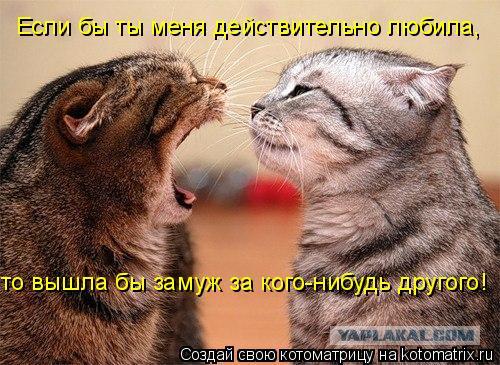 Котоматрица: Если бы ты меня действительно любила,  то вышла бы замуж за кого-нибудь другого!