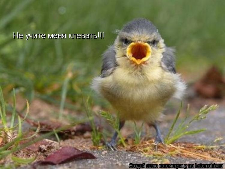 Котоматрица: Не учите меня клевать!!!