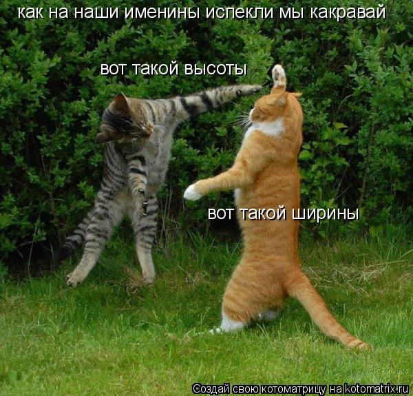 http://kotomatrix.ru/images/lolz/2008/12/09/YT.jpg