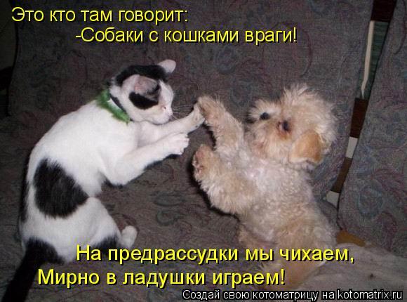 Котоматрица: Это кто там говорит: -Собаки с кошками враги! На предрассудки мы чихаем,  Мирно в ладушки играем!