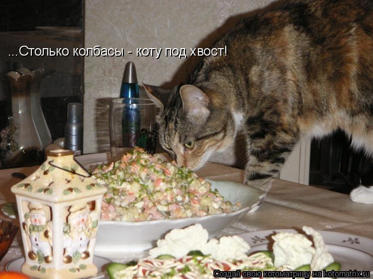 Котоматрица: ...Столько колбасы - коту под хвост!