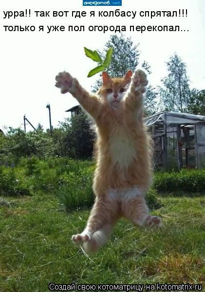 Котоматрица: урра!! так вот где я колбасу спрятал!!! только я уже пол огорода перекопал...