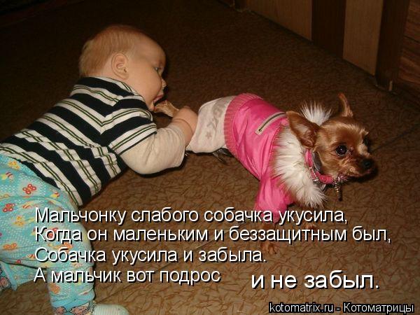 Котоматрица: Мальчонку слабого собачка укусила, Когда он маленьким и беззащитным был, Собачка укусила и забыла. А мальчик вот подрос и не забыл.