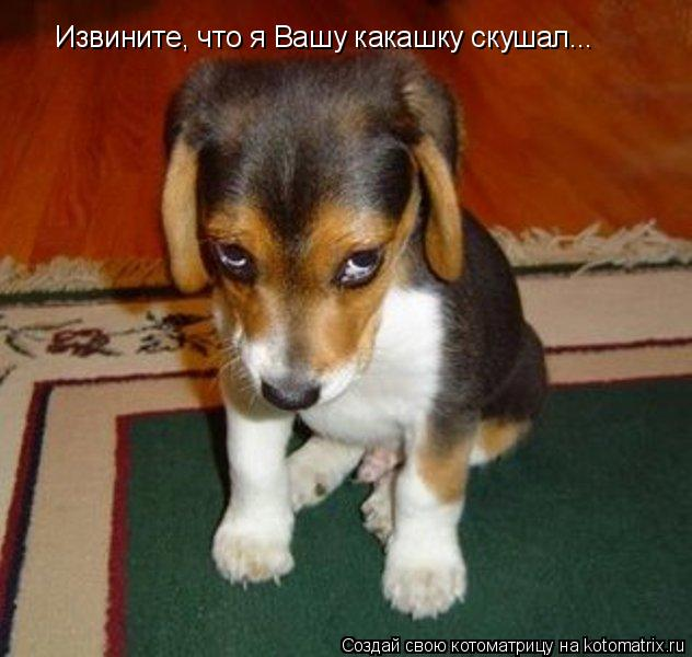 Котоматрица: Извините, что я Вашу какашку скушал...