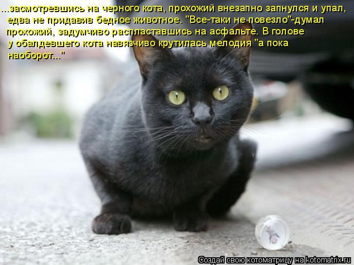 """Котоматрица: ...засмотревшись на черного кота, прохожий внезапно запнулся и упал,  едва не придавив бедное животное. """"Все-таки не повезло""""-думал  прохожий,"""