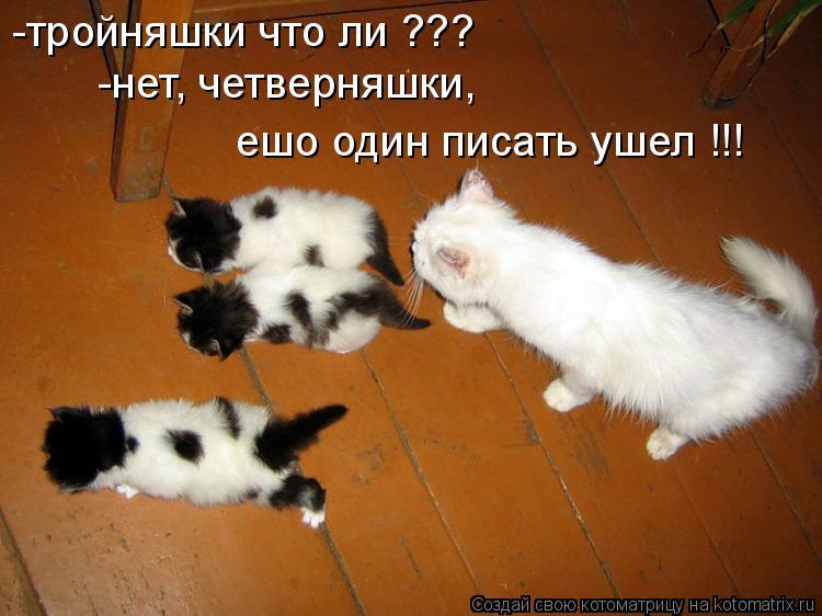 Котоматрица: -тройняшки что ли ??? -нет, четверняшки,  ешо один писать ушел !!!