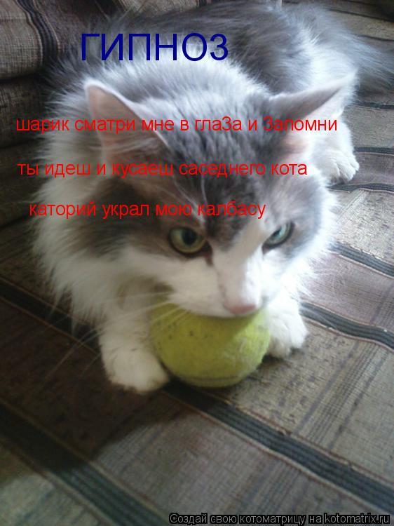 Котоматрица: шарик сматри мне в гла3а и 3апомни  ты идеш и кусаеш саседнего кота каторий украл мою калбасу ГИПНО3