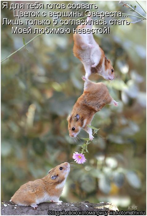 Котоматрица: Я для тебя готов сорвать Цветок с вершины Эвереста... Лишь только б согласилась стать Моей любимою невестой!
