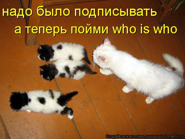 Котоматрица: надо было подписывать а теперь пойми who is who