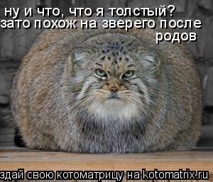 Котоматрица: ну и что, что я толстый? зато похож на зверего после  родов