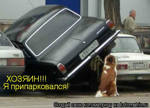 Котоматрица: ХОЗЯИН!!! Я припарковался!
