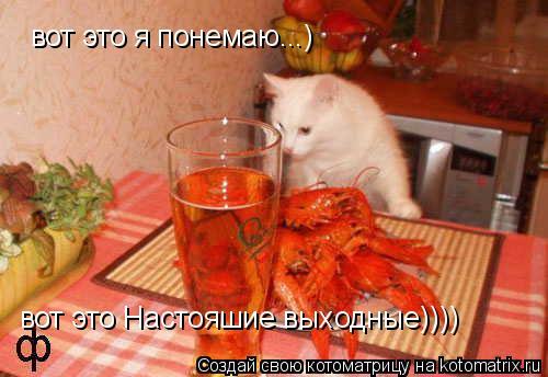 Котоматрица: вот это я понемаю...) вот это Настояшие выходные))))
