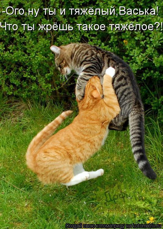 Котоматрица: -Ого,ну ты и тяжёлый,Васька! Что ты жрёшь такое тяжёлое?!
