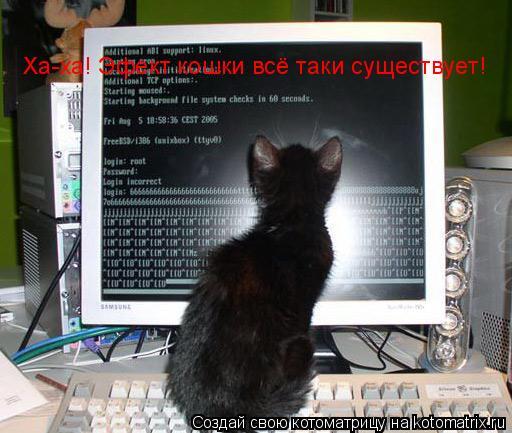 Котоматрица: Ха-ха! Эфект кошки всё таки существует!