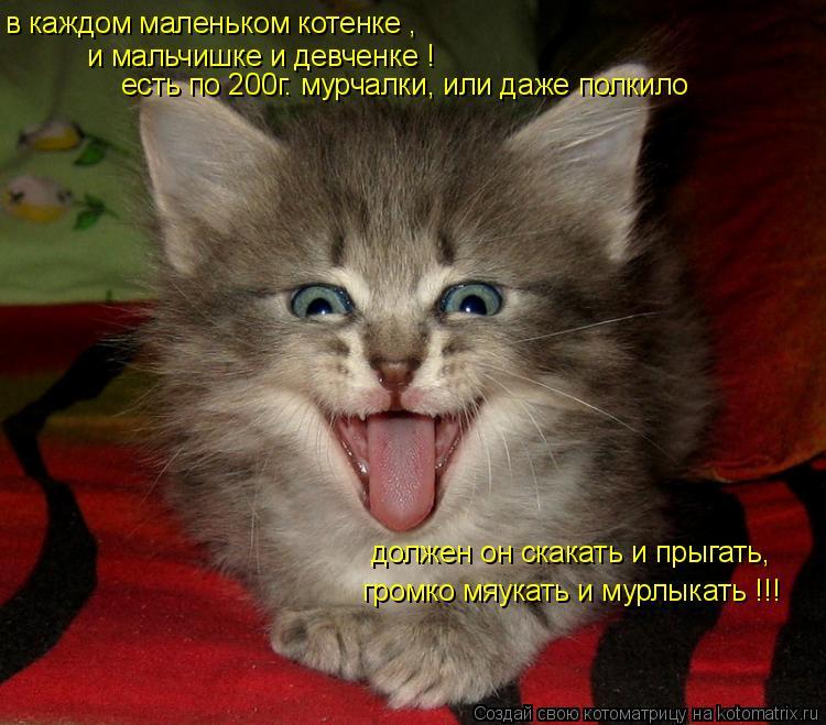 Котоматрица: в каждом маленьком котенке , и мальчишке и девченке ! есть по 200г. мурчалки, или даже полкило должен он скакать и прыгать,  громко мяукать и му