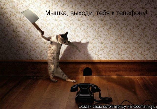 Котоматрица: Мышка, выходи, тебя к телефону!