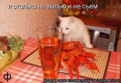Котоматрица: я столько не выпью и не съем.
