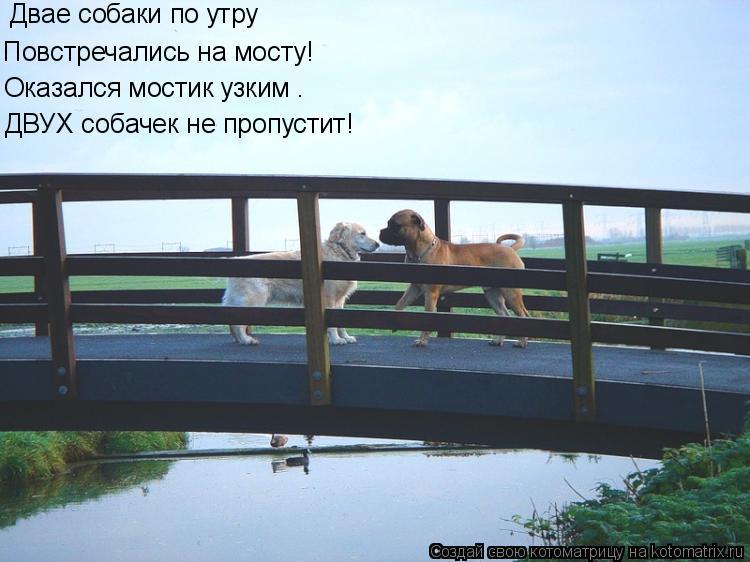 Котоматрица: Двае собаки по утру Повстречались на мосту! Оказался мостик узким – ДВУХ собачек не пропустит!