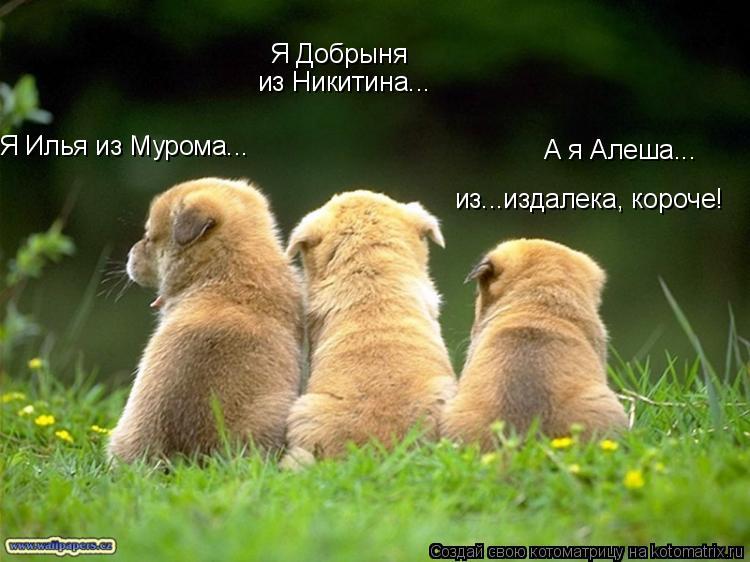 Котоматрица: Я Илья из Мурома... Я Добрыня  из Никитина... А я Алеша... из...издалека, короче!