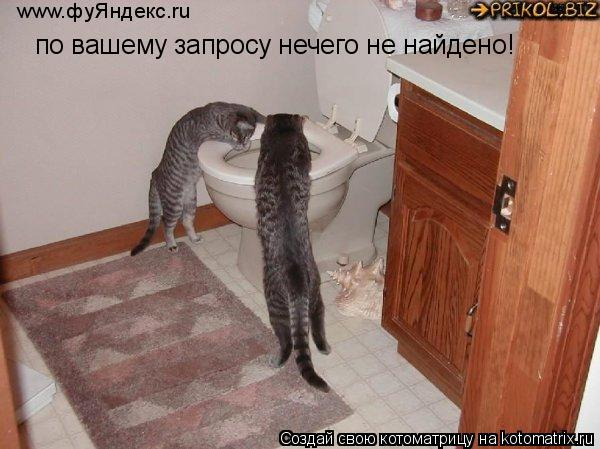 Котоматрица: по вашему запросу нечего не найдено! www.фуЯндекс.ru