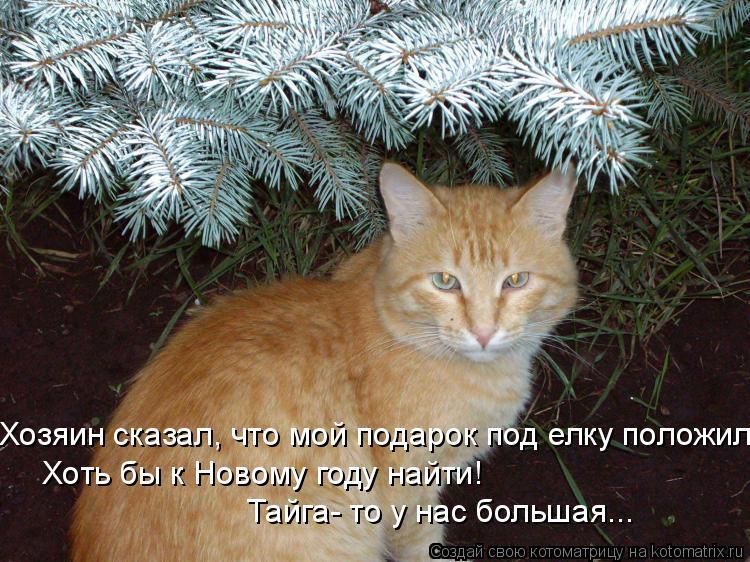 Котоматрица: Хозяин сказал, что мой подарок под елку положил Хоть бы к Новому году найти!  Тайга- то у нас большая...