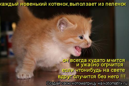 Котоматрица: каждый новенький котенок,выползает из пеленок он всегда кудато мчится и ужасно огрчится если чтонибудь на свете вдруг случится без него !!!