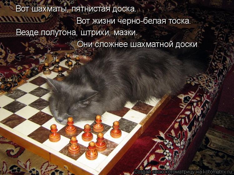 Котоматрица: Вот шахматы, пятнистая доска. Вот жизни черно-белая тоска. Везде полутона, штрихи, мазки. Они сложнее шахматной доски