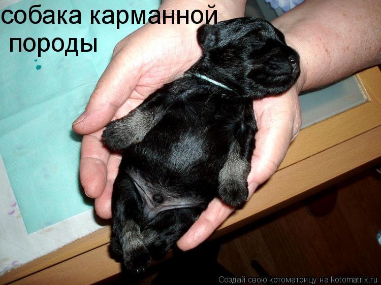 Котоматрица: собака карманной  породы
