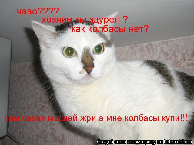 Котоматрица: чаво???? хозяин ты здурел ? как колбасы нет? сам своих мышей жри а мне колбасы купи!!!